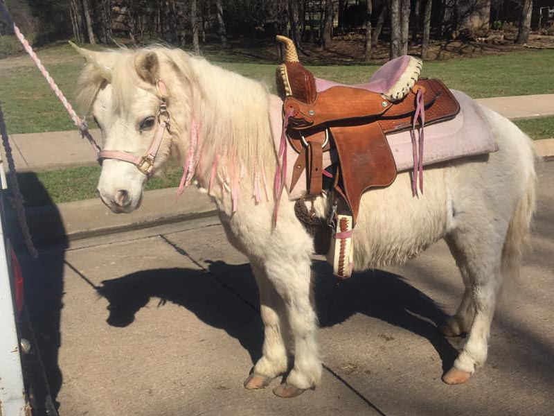 White Pony at the kids Pony Rides Section